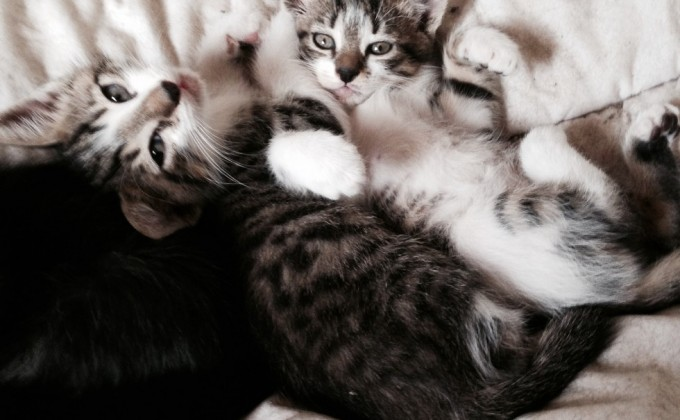 Petits chatons mignons d'amour ♥